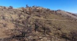احیا عرصههای جنگلی سوخته «زرشک چال» کردکوی